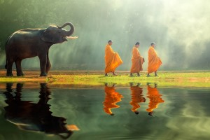 Elephant-and-monks-shutterstock_382198903