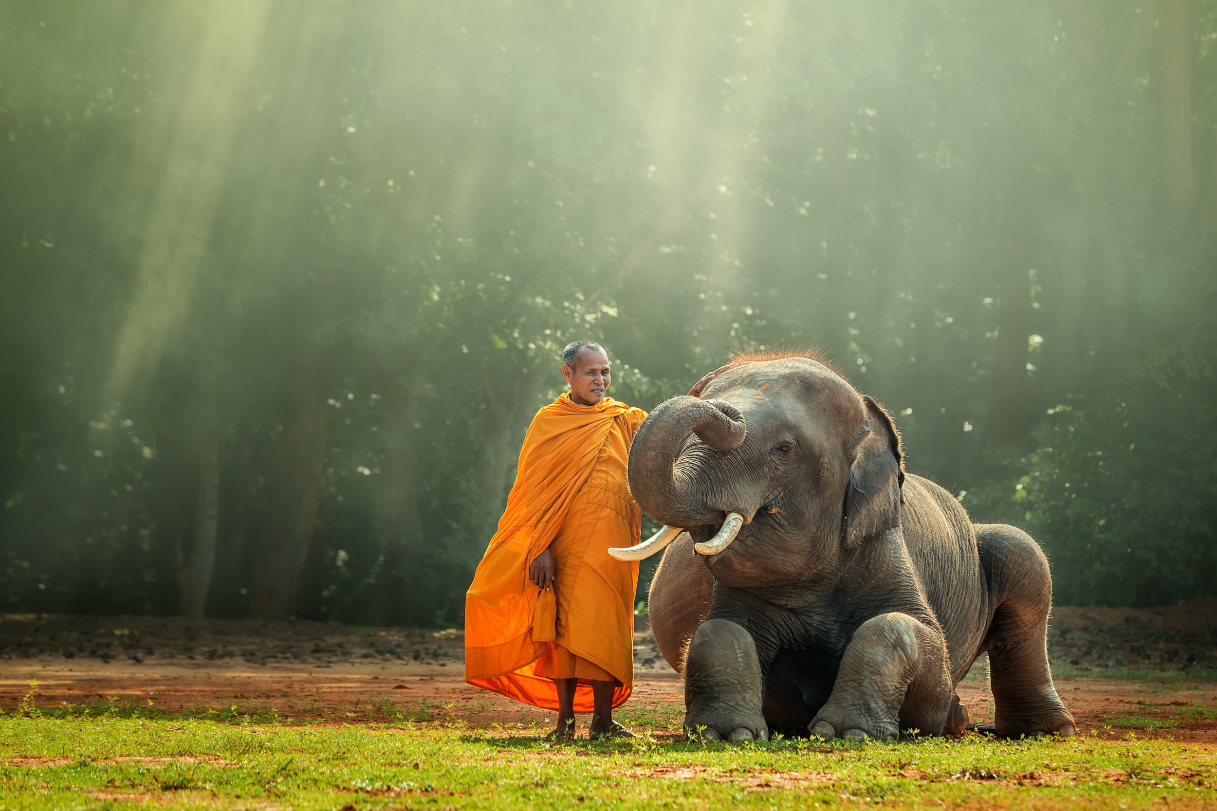 In India The Elephant Is A Symbol For Power Dignity Intelligence
