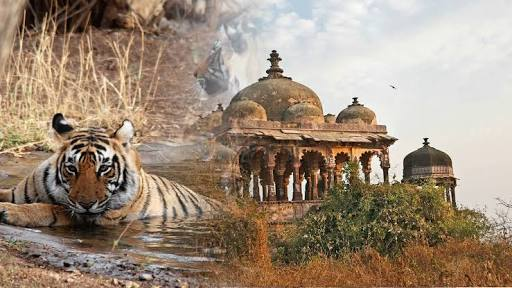 Ranthambhore National Park; The fortieth largest national park in northern India!
